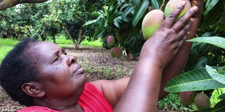 Reshaping Africa's Rural Food Systems and Cutting Food Losses
