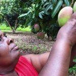 Africa Food Loss